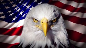 Determined eagle and USA Flag - www find